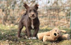 Terminänderung für die Kindergruppe der Wiesel @ Tierheim Siegen   Siegen   Nordrhein-Westfalen   Deutschland