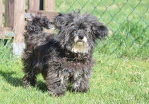 Auf den Hund gekommen?! - Professionelle Starthilfe für den eigenen Hund @ Tierheim Siegen | Siegen | Nordrhein-Westfalen | Deutschland