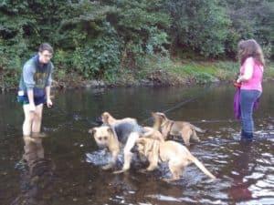 Gassigehen mit Tierheim-Hunden