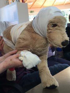 Erste Hilfe am Hund @ Tierheim Siegen | Siegen | Nordrhein-Westfalen | Deutschland