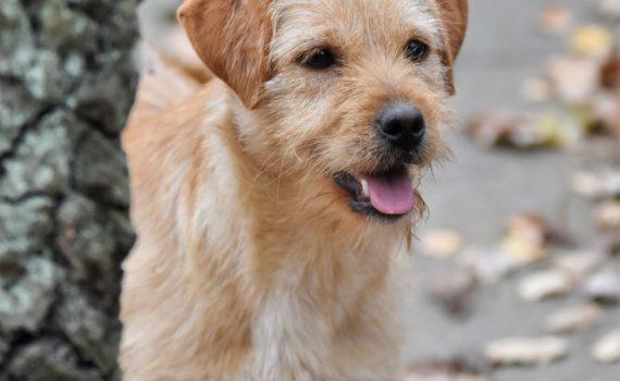 Hunde Tierheim Siegen