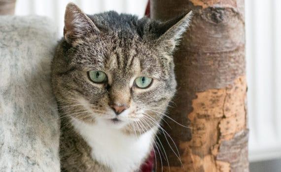 Tierheim Siegen Katzen