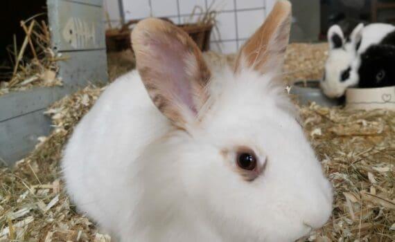 Kaninchenbabys Tierheim Siegen